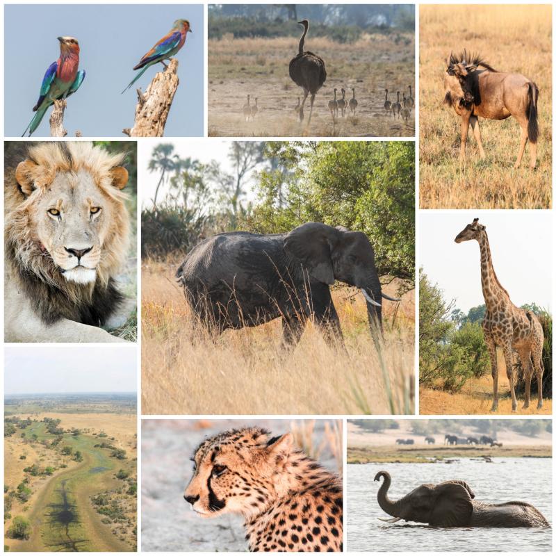 Botswana Photos 2